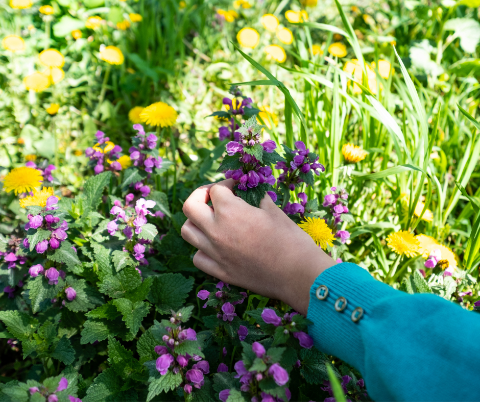 Brug Sommerferiepas til sommeraktiviteter på Glud Museum. Vær kreativ med blomster, kom på sanketur
